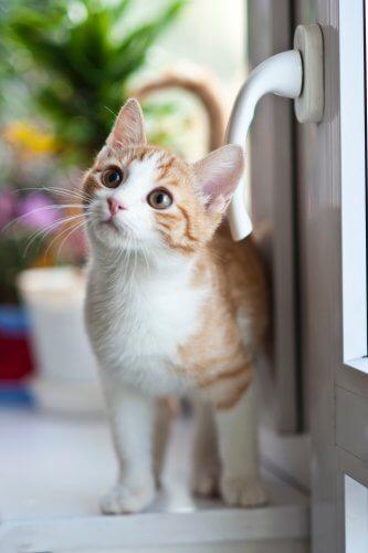 cat next to door handle